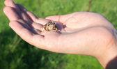 Frog on hand — Stock Photo