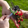 Stock Photo: Red Prom Corsage