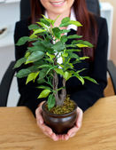 Close-up of a caucasian businesswoman holding a plant — Stock Photo