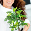 Smiling businesswoman holding a plant smiling at the camera — Stock Photo