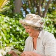 Mature woman working in her garden — Stock Photo