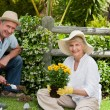 Mature couple working in the garden — Stock fotografie