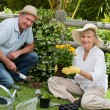Mature couple working in the garden - Foto Stock