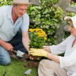 Mature couple working in the garden — 图库照片