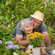 Senior couple working in the garden — Stockfoto