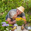 Foto Stock: Senior couple working in the garden