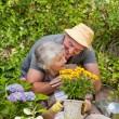 Senior couple working in the garden — Stock Photo
