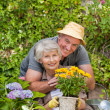 Senior couple working in the garden — Foto de Stock
