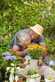 Senior couple working in the garden — Stock Photo