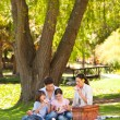 Cute family picnicking in the park — Stock fotografie