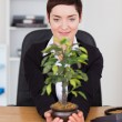 Stock Photo: Businesswomlooking at plant