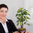 Office worker holding a plant — Stock Photo #11178724