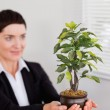 Office worker looking a plant — Stock Photo #11178725