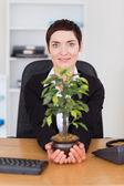 Empresária, segurando uma planta — Fotografia Stock