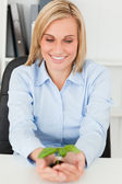 Businesswoman looking at little green plant — Stock Photo