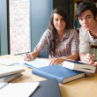 Young students working together — Stock Photo