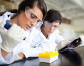 Serious young scientists working — Stock Photo