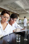 Portrait of young science students working — Stock Photo