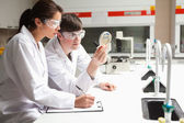 Concentrate students in science looking at a Petri dish — Stock Photo