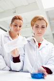 Portrait of science students doing an experiment — Stock Photo