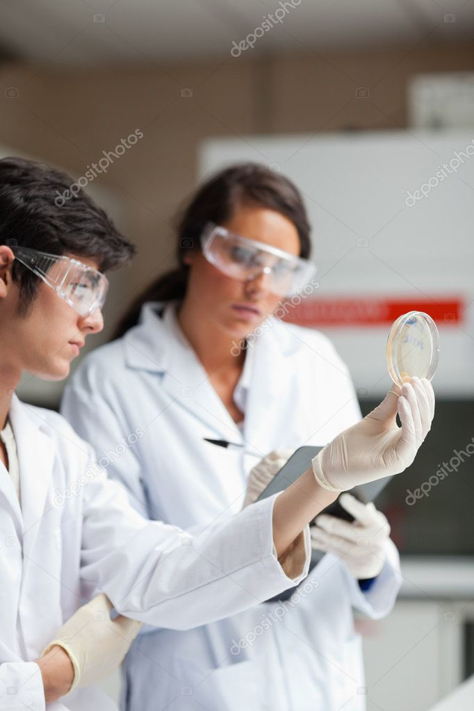 Portrait of science students looking at Petri dish in a laboratory — Stock Photo #11191416