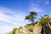 Landscape with a pine tree on a cliff — Stock Photo