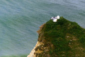 Two seagulls on the cliff over the sea — Stock Photo