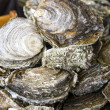 Fresh delicious oysters (closeup) on the dish — Stock Photo