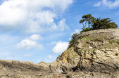 Landscape with a pine trees on a cliff — Stock Photo
