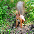 Portrait of the squirrel under a tree — Stock Photo
