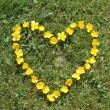 Stock Photo: Buttercups like heart