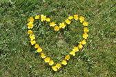 Buttercups like a heart — Stock Photo