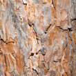 Background of pine bark — Stock Photo