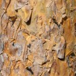 Stock Photo: Background of sunlit pine bark