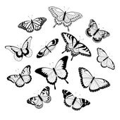 Black and white butterflies — Stock Vector