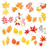 Autumn leaves and berries — Stock Vector