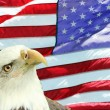 Bald Eagle Set Against American Flag - Stock Photo