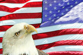 Bald Eagle Set Against American Flag — Foto de Stock