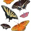 Six Isolated Butterfly's - Stock Photo