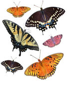 Six Isolated Butterfly's — Stock Photo