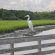 Great White Egret on Railing — Stock Photo #11729531