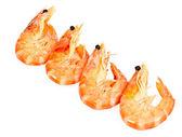 Four boiled shrimp — Stock Photo