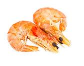 Two boiled shrimp isolated on white background — Stock Photo