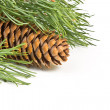 Christmas fir branch with cones on a white background — Stockfoto