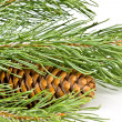 Christmas fir branch with cones — Stock Photo
