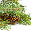 Christmas fir branch with cones — Stock Photo #12403533