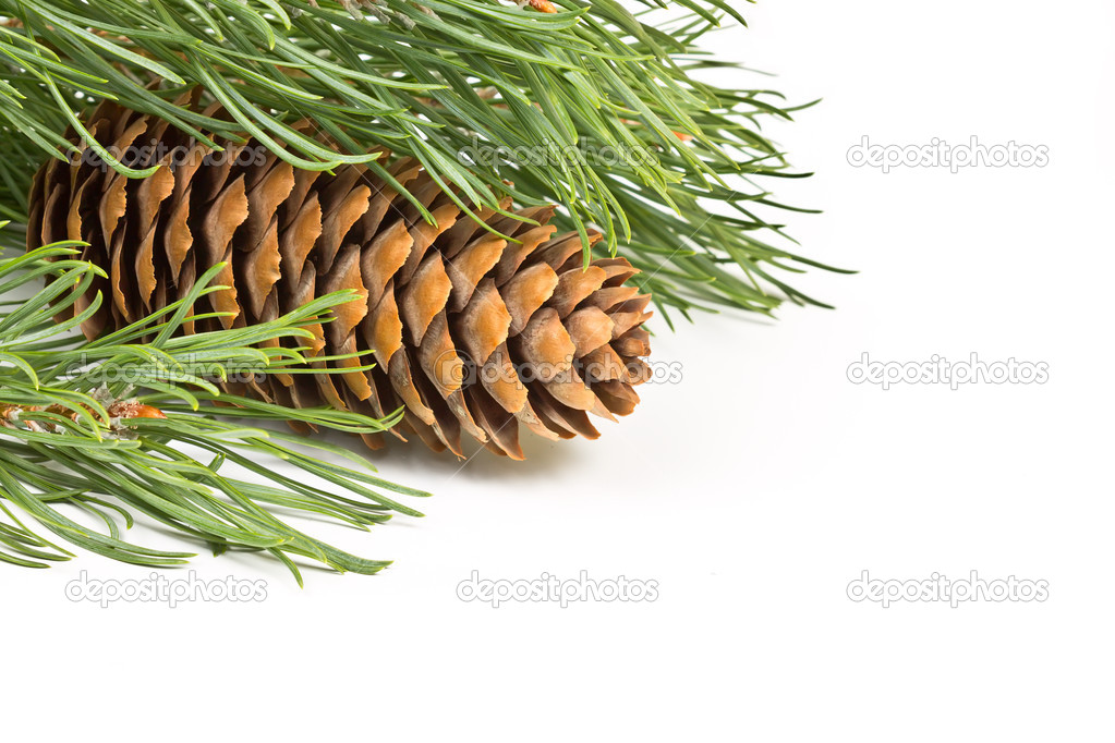 Christmas fir branch with cones on a white background — Stock Photo #12402209