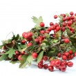 Stock Photo: Autumn red fruits - hawthorn