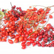 Various autumn red fruits - rowan berries, hawthorn, rose hip - Stock Photo