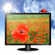 Monitor with poppy, ladybug, sun and clouds — Stock Photo #10797013